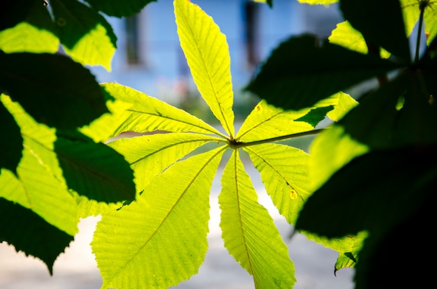 Light-green leaf with blurred background