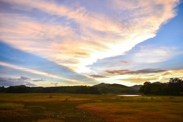 Light green meadow and gold lighten of sunset