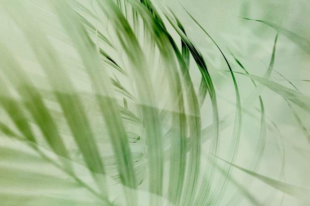Светло-зеленый фон пальмовых листьев