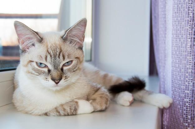 Светлый котенок спит на подоконнике. милый кот спит на крупном плане подоконника.
