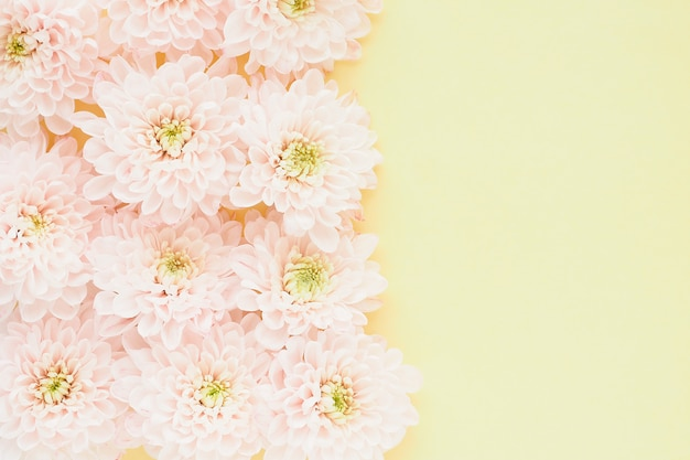 Light pink chrysanthemum flowers with yellow-green centers on a yellow table.