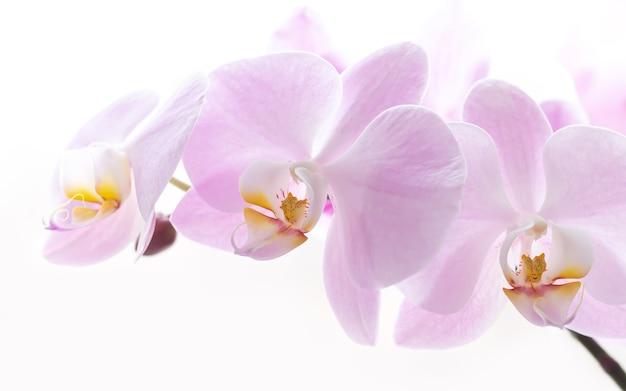 밝은 분홍색 난초 꽃 지점 배경 클로즈업