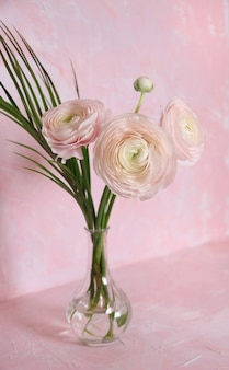 Light pink ranunculus and monstera leaf in glass vase on pink background. front view. vertical photo.