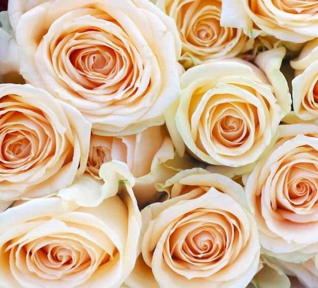 Светло-розовые розы крупным планом