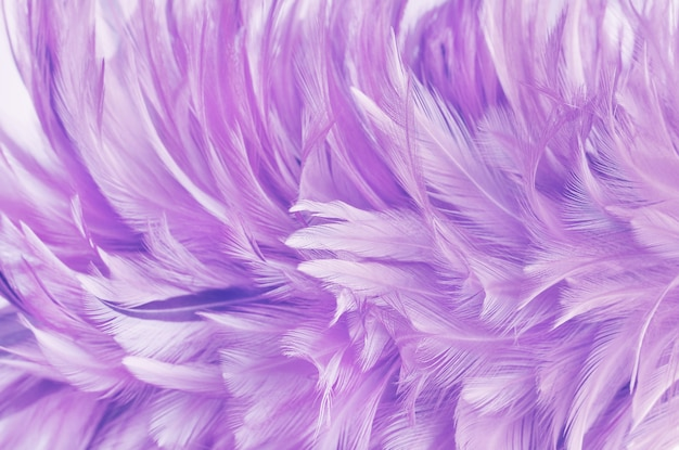 Light purple feather wing pattern texture for and design art work.