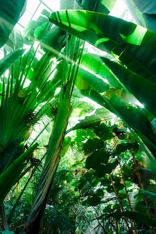 Light ray in a jungle rainforest. tropical background