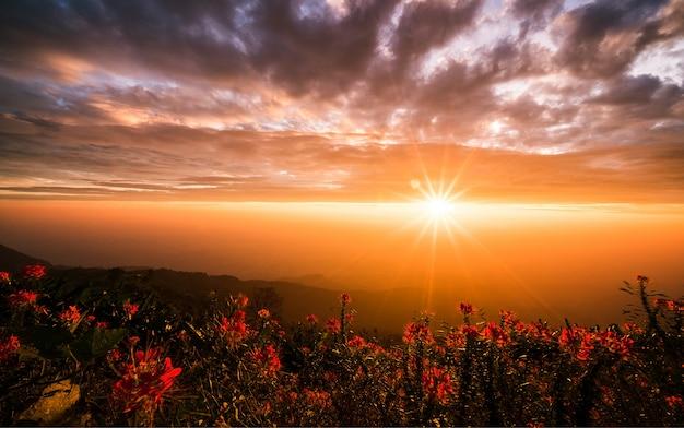 Лучи света от солнца, который светит на красивые красные цветы.
