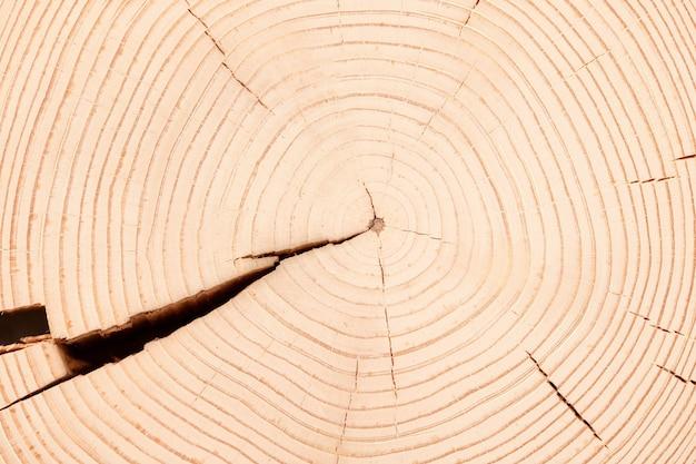 Световой стол из среза ствола с годичными кольцами. текстура древесины пень