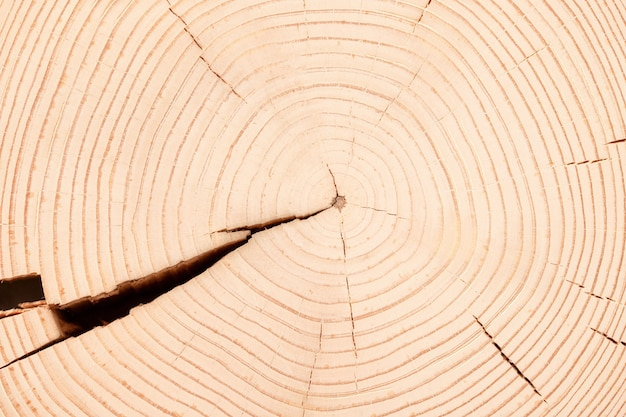 Light table from a cut of trunk with annual rings. wood stump texture