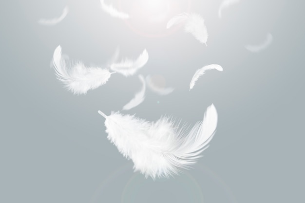 Light white feathers flaoting in the sky