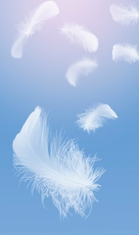Light a white fluffy feathers falling down in the sky