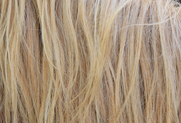 Light yellow horse hair. horse mane.