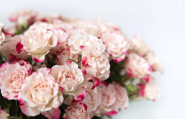 분홍색 꽃잎을 가진 밝은 노란색 장미