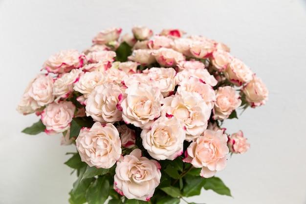 Светло-желтые розы с розовыми лепестками
