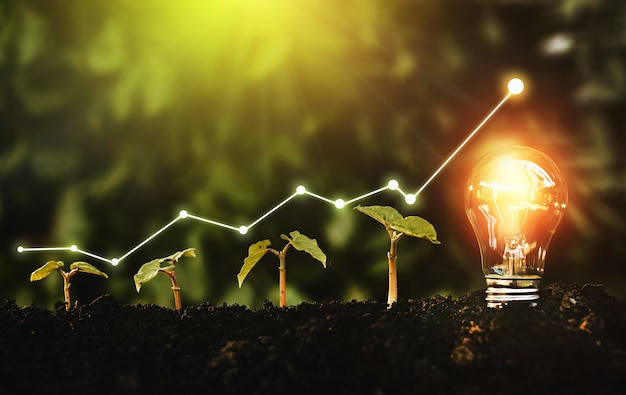 Lightbulb is located on the soil, and plant are growing.