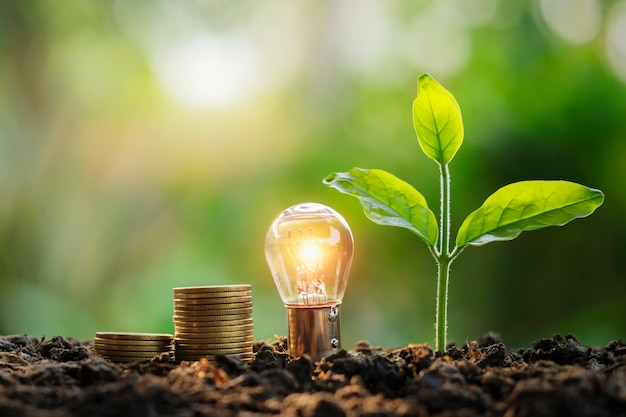 Lightbulb money stack and young plant in nature. idea saving energy and accounting finance concept