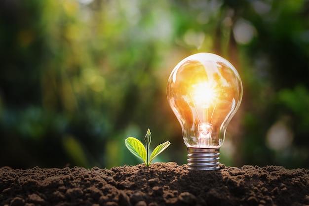 토양과 햇빛에 작은 식물과 전구. 자연의 에너지 절약 개념