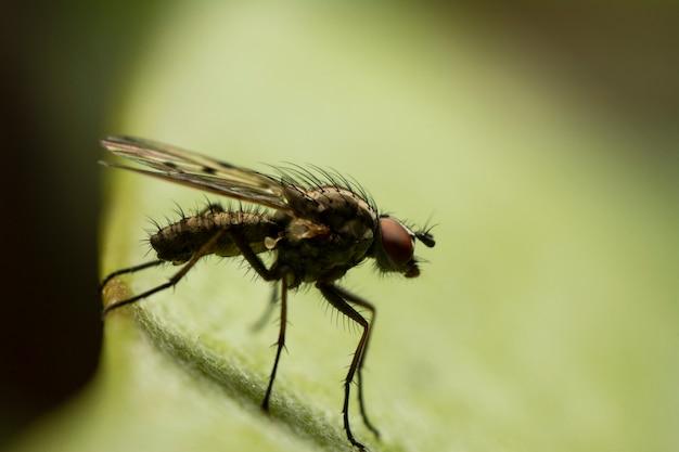 Крупный план отечественной мухы, красивое ligth, зеленая рассеянная предпосылка.