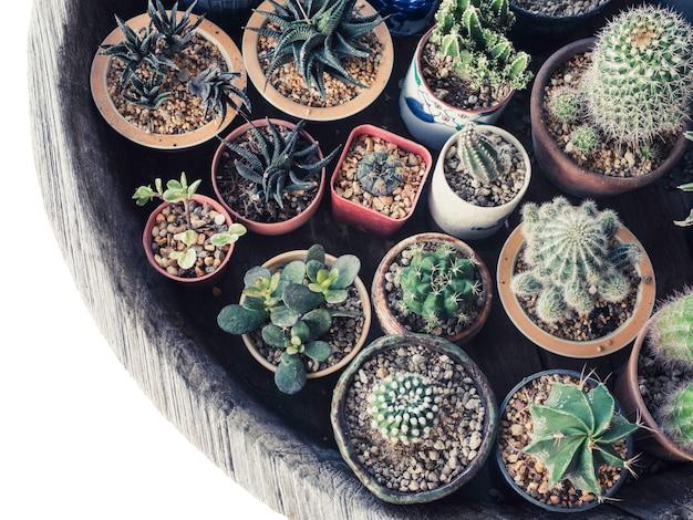 Liitle cactus