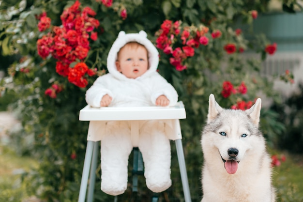 Liittle baby boy in bear costume with adorable husky puppy friendly portrait.