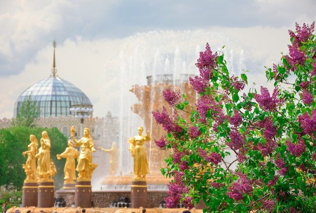 Lilac on the background of the fountain of friendship of peoples in the park vdnkha