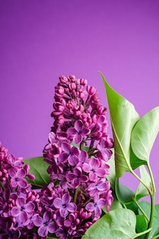 Lilac bouquet flowers with leaves on minimal violet background, angle view copy space