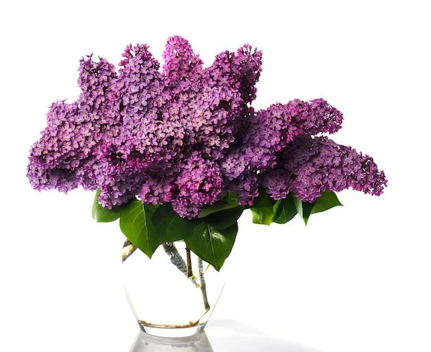 白で隔離されるライラックの花束。ガラスの花瓶の薄紫色の花