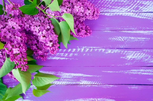 Lilac branch of lilac with green leaves on a purple wooden background