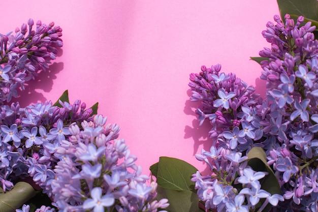 ピンクのコピースペースの背景にライラックの枝。開花枝。