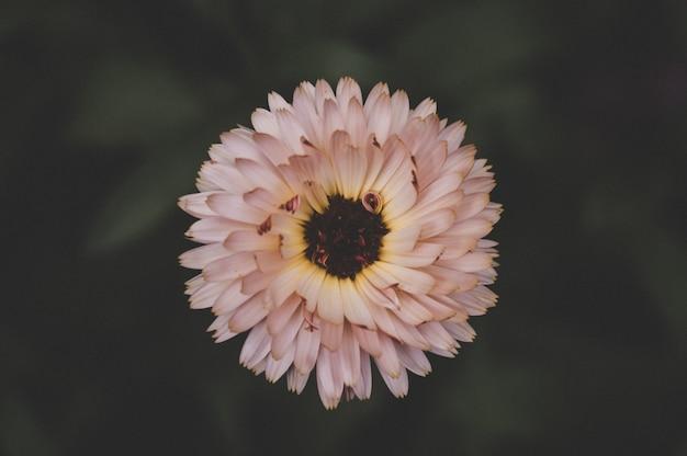 Сиреневый цветок крупным планом, натуральная текстура
