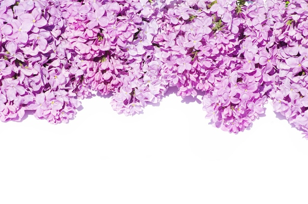 白い背景で隔離のライラックの花
