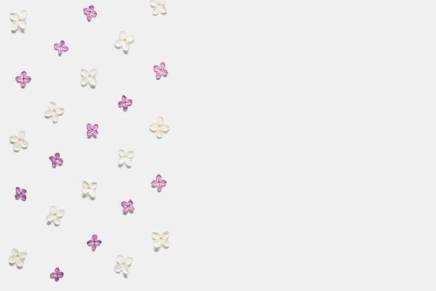 白で隔離されるライラックの花の境界線