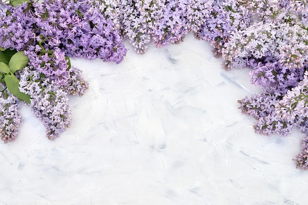 Lilac flowers border on white.