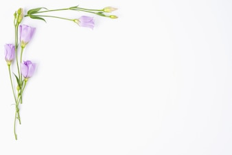 Lilac flowers bordering corner