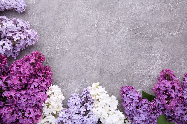 Lilac flowers branch on grey background concrete  with copyspace
