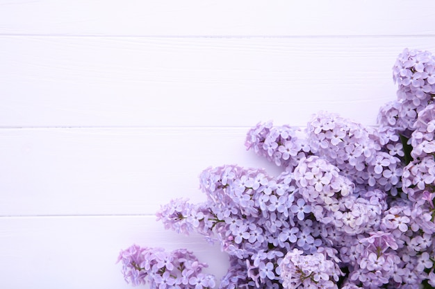 Lilac flowers branch on white  with copyspace