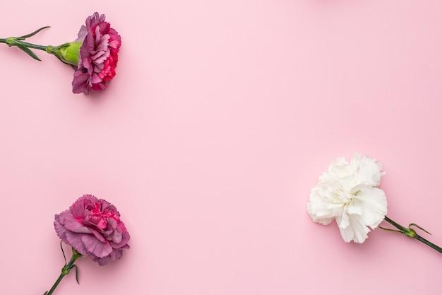 핑크에 라일락 꽃 카네이션