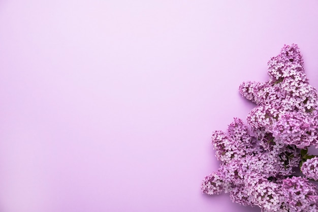 Lilac flowers on color background. spring is coming concept. text space