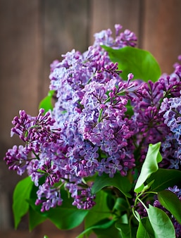 Lilac flowers and leaves in the nature