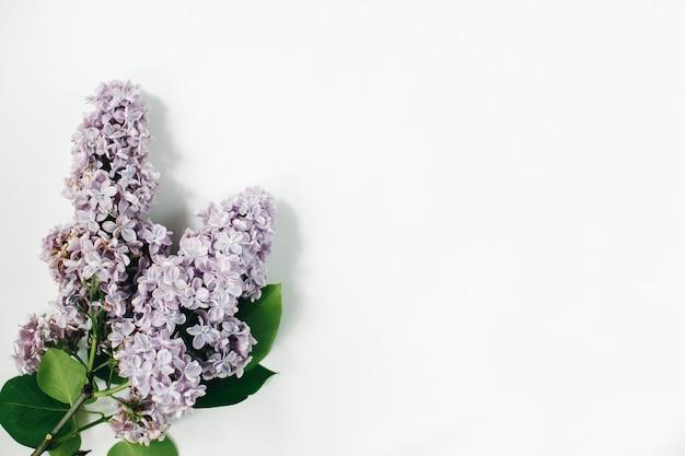 Сиреневые цветы на белой поверхности