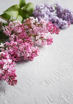 Lilac flowers on a white textured background