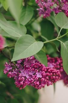 緑の葉とライラックの花がクローズアップ
