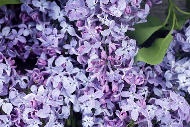 ライラックの花びらのクローズアップ、自然の春の背景