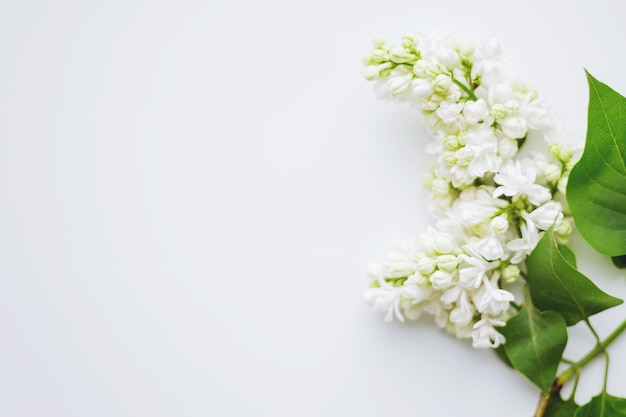 Lilac (syringa) flowers. place for text.