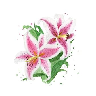 水彩と手描きのユリの花の花束イラスト
