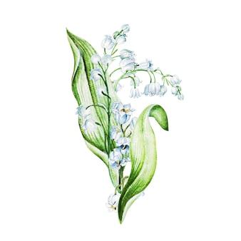 スズランの花。水彩手描きイラスト。