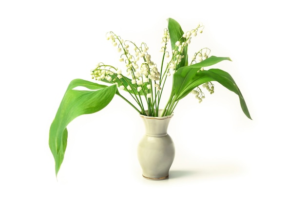 Ландыши в вазе, изолированные на белом фоне