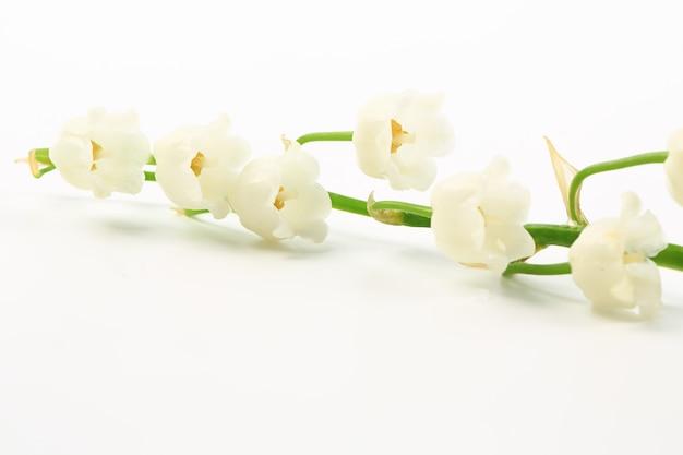 Ландыши на белом фоне. весенние цветы