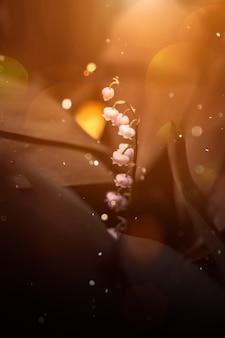 スズラン春の背景光とボケ夏の森、庭の花