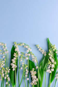 Lilies of the valley on pastel blue